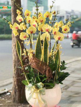 Bình Hoa Lan Hồ Điệp - Phát Tài Phát Lộc