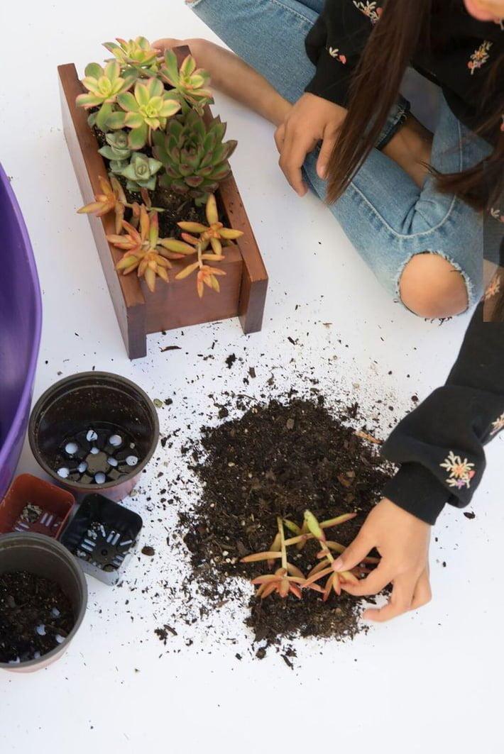 Đổ vào rể cây lớp đất cho đến khi cách bề mặt mức độ khoảng 1cm. Cuối cùng là rải lớp sỏi được đánh bóng đều các mặt để tạo cảm giác an toàn cho tay bạn và cây trồng.