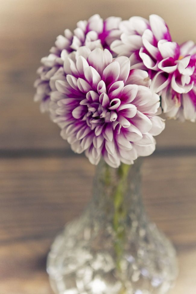 Những bông hoa thược dược có cùng màu, cùng kích cỡ được cắm vào lọ hoa là đủ để góc nhỏ tỏa sáng.