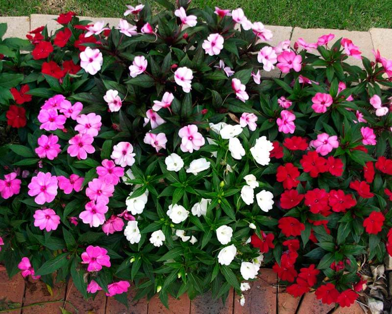 Những loài hoa đẹp và dễ trồng nhất cho nhà phố