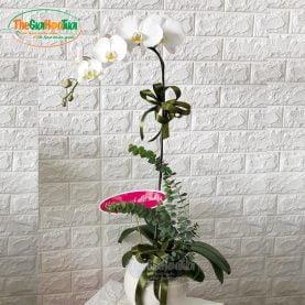 Bình hoa hồ điệp - Vẻ đẹp thuần khiết - TGHT-20013