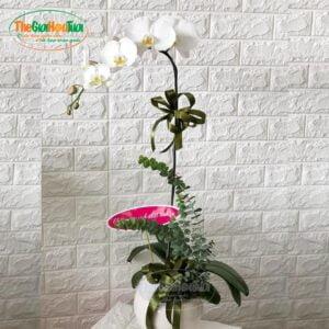 Bình hoa hồ điệp - Vẻ đẹp thuần khiết