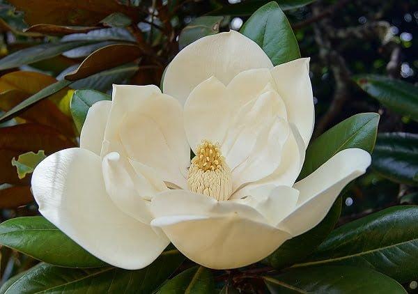 Vẻ đẹp và ý nghĩa các loài Quốc hoa trên thế giới